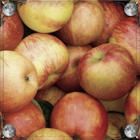 Рвать яблоки