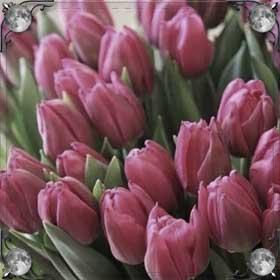 Рвать тюльпаны