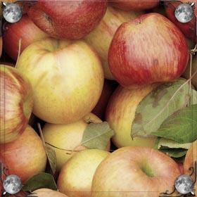 Сад с яблоками