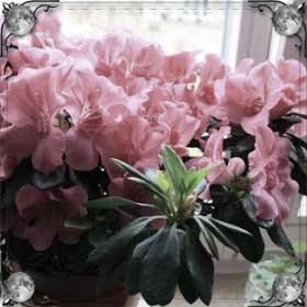 Садить цветы