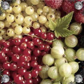 Сажать ягоды