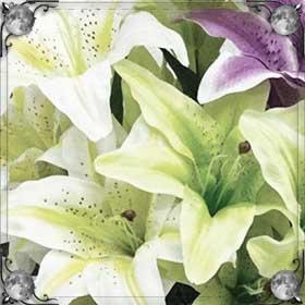 Сажать лилии