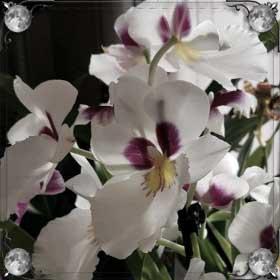 Сажать орхидеи