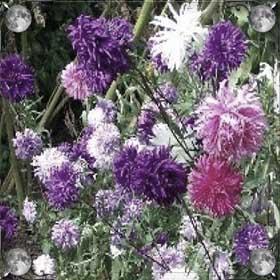Сеять цветы