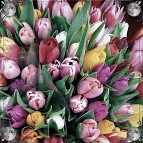 Серебряные тюльпаны