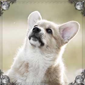Шея собаки