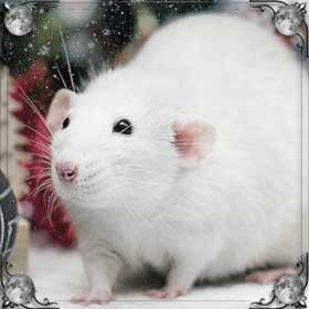 Съесть крысу