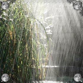 Сильный ветер в дождь