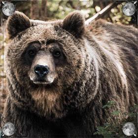 Съел медведь