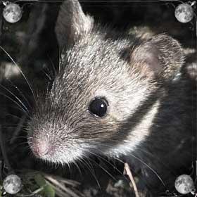 Съесть мышей