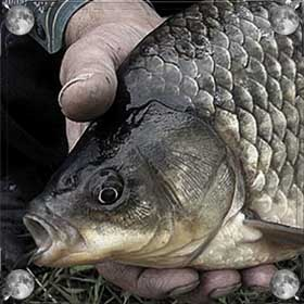 Словить рыбу