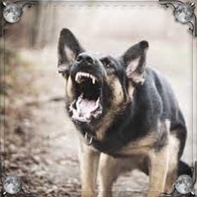 Собака хочет укусить