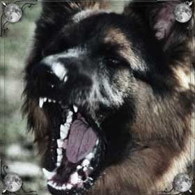 Собака кидается
