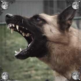 Собака пытается укусить