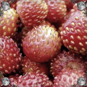 Собирать ягоды земляники