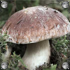 Солить грибы