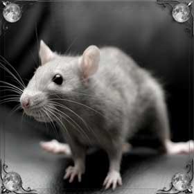 Спасать мышей