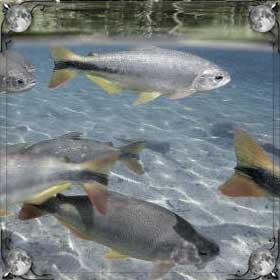 Спасать рыбу