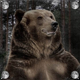 Спасти медведя