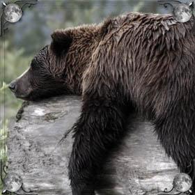Спящие медведи