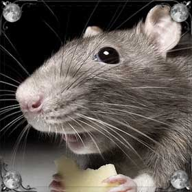 Стая мышей