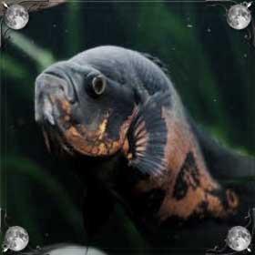 Страшная рыба