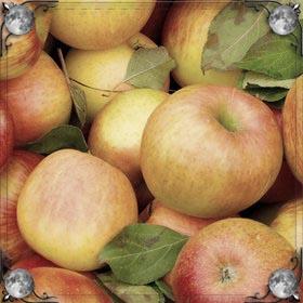 Сумка яблок