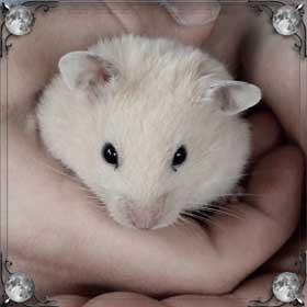 Толстая мышь