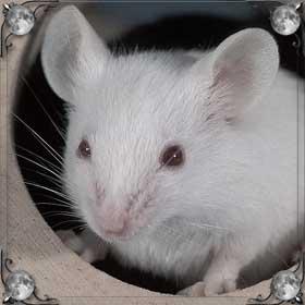 Травить мышей