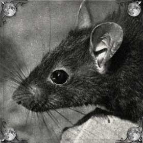 Убегать от крысы