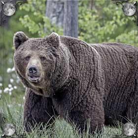 Нападающий медведь
