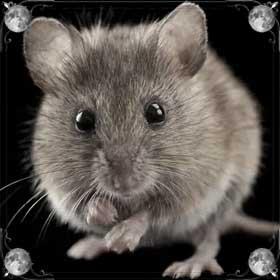 Убитые мыши