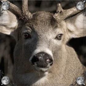 Убитый олень
