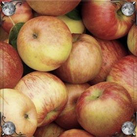 Угощать яблоками