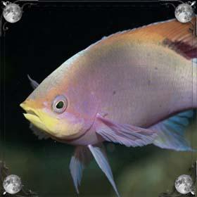 Уха из рыбы