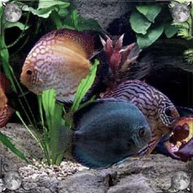 Украсть рыбу
