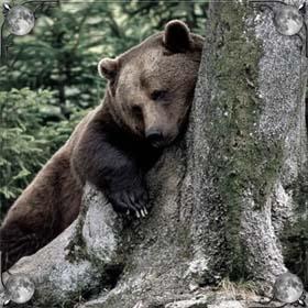 Укусил медведь