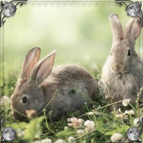 Укусил заяц