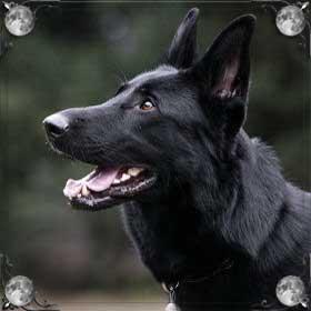 Укусила черная собака