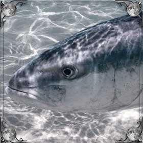 Укусила рыба