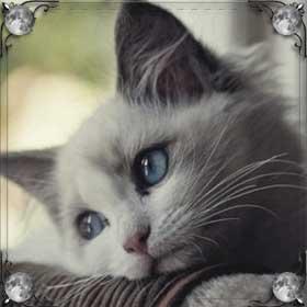 Умерла кошка
