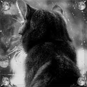 Умершая кошка