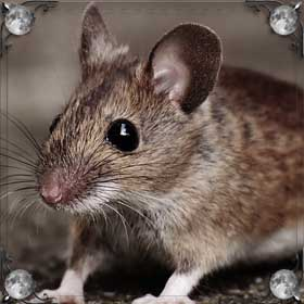 Умершие мыши