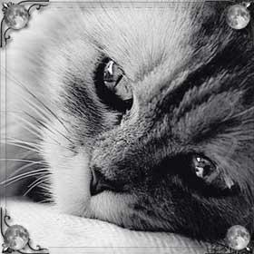 Умерший кот