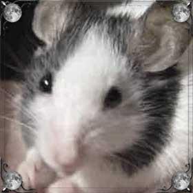 Умирающая мышь