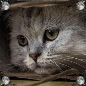 Умирающая кошка