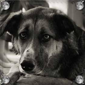 Умирающая собака