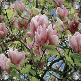 Увядшие цветы