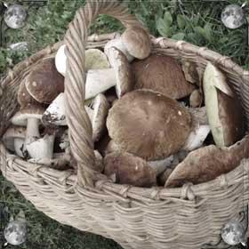 Варить грибы