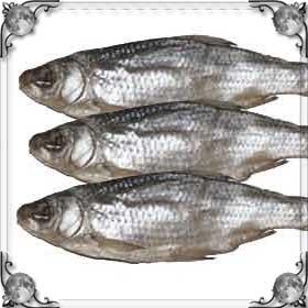 Выбрасывать рыбу